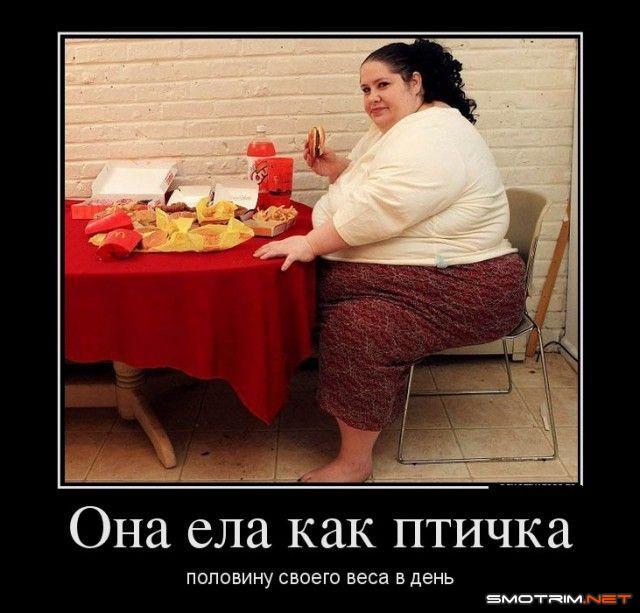Картинки про толстых и диеты