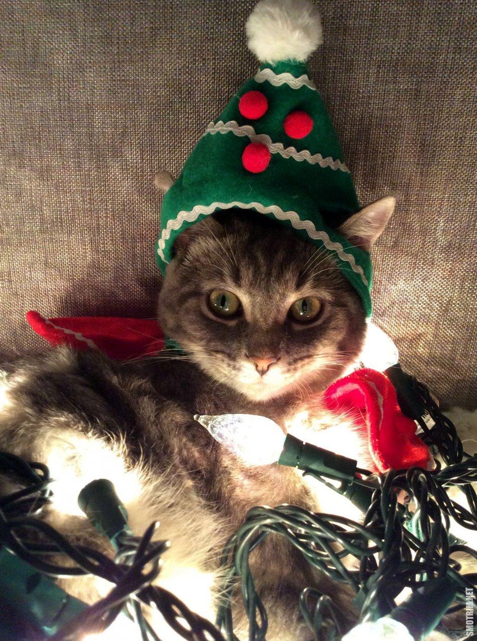 уверена, прикольное новогоднее фото на аву того