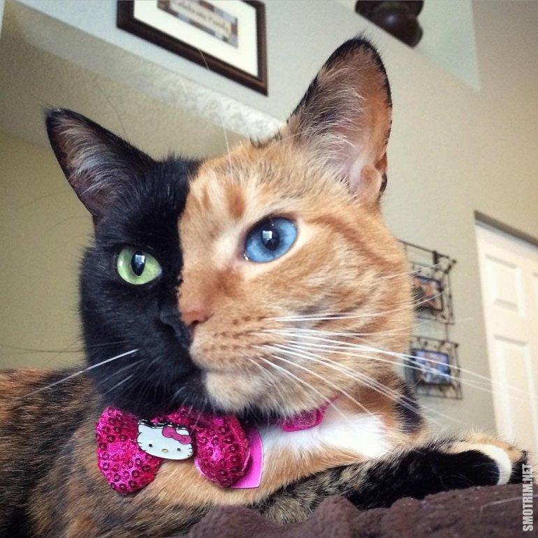 необычные коты мира фото и описание рецепт