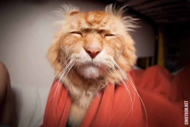 Для майл, прикольные картинки доброе утро с животными