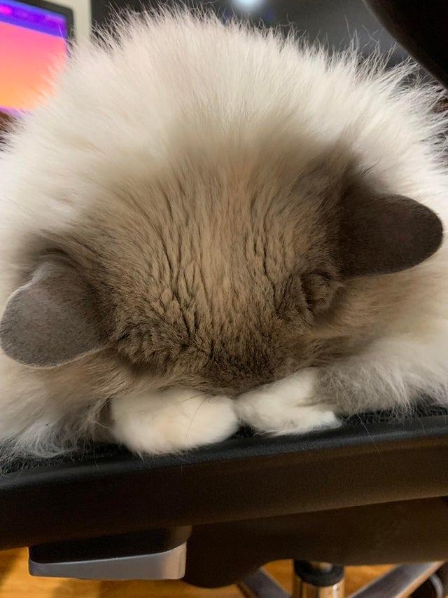 милое спящее животное на прикольном фото
