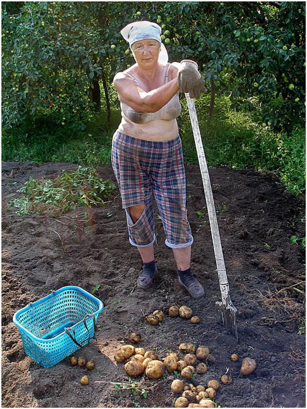 смешные фото работы в огороде прибывшему краснодар